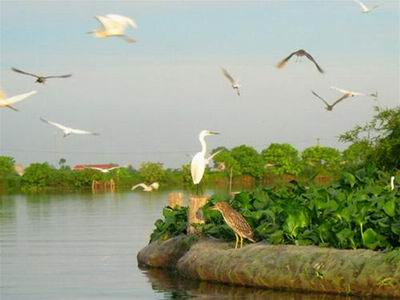 Stork Island listed as national relic
